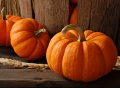pumpkin lesson plans, pumpkin activities, pumpkin recipes