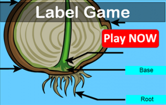 Play Label Game